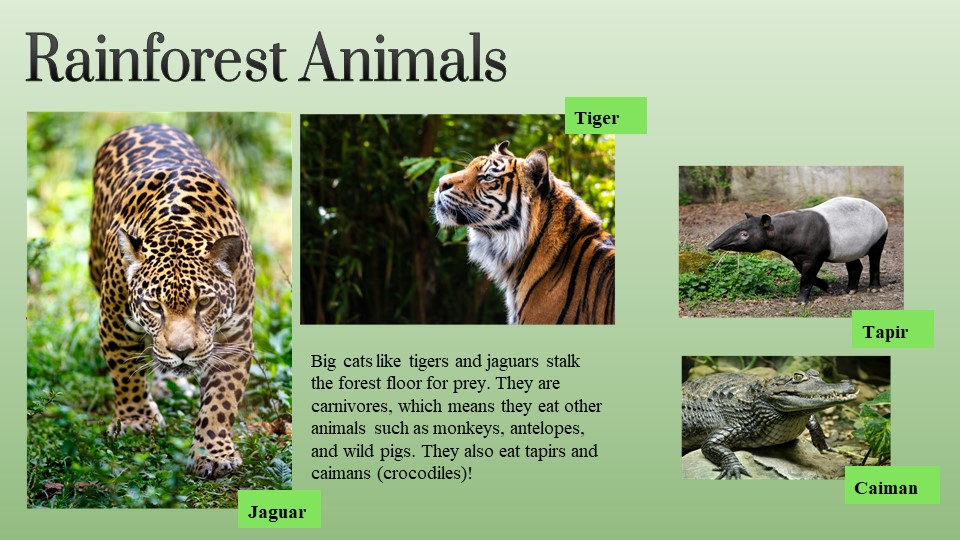 This image has an empty alt attribute; its file name is Exploring-the-Rainforest-1.jpg